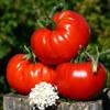 ЭкоТомато| Свои семена