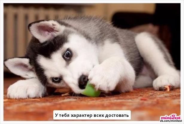 photo from album of Elіna Konvalyuk №8