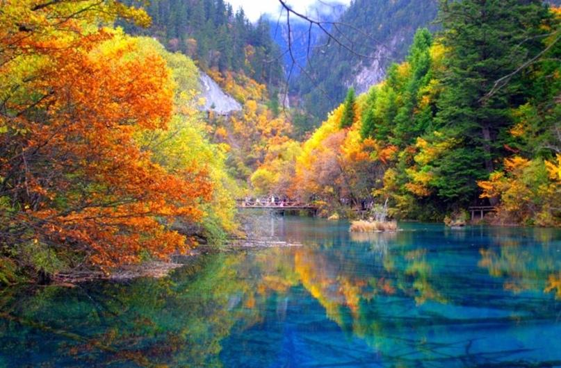 Самые красивые леса нашей планеты., изображение №2