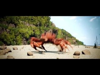 Танцующий краб  [вставка для видео монтажа] crab