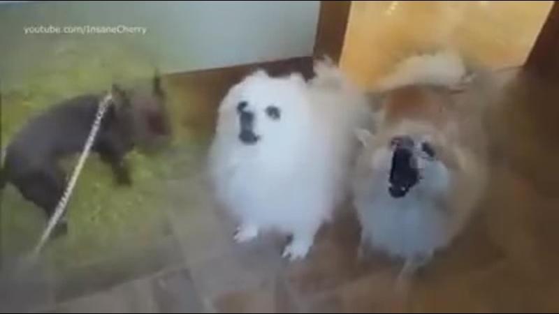 Animallica Master of puppy