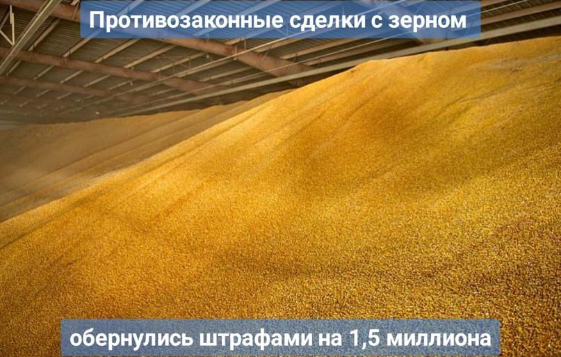 Противозаконные сделки с зерном обернулись штрафами на 1,5 миллиона