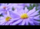 Скачать-Суперское-поздравление-подруге-с-Днем-Рождени!-Красивые-музыкальные-поздравления-ZOOBE-Муз-Зайкасмотреть-онлайн_720p.