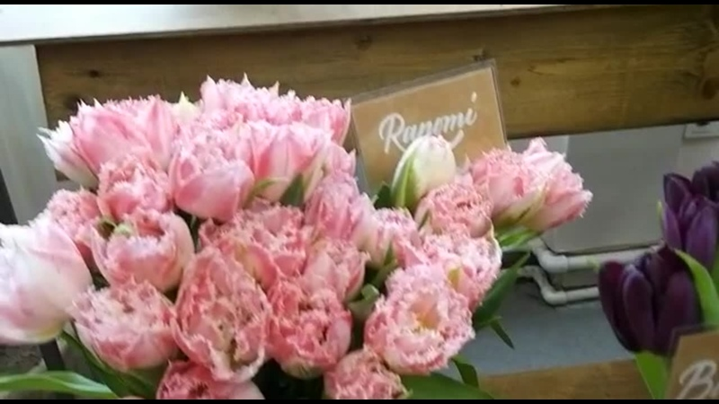 1 Выставка тюльпанов в ботаническом саду Петра Великого 8 03 21г
