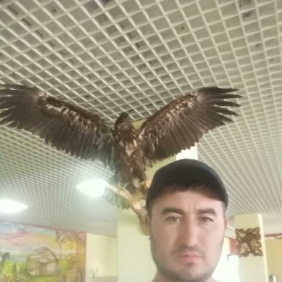 Амир Хамрокулзода