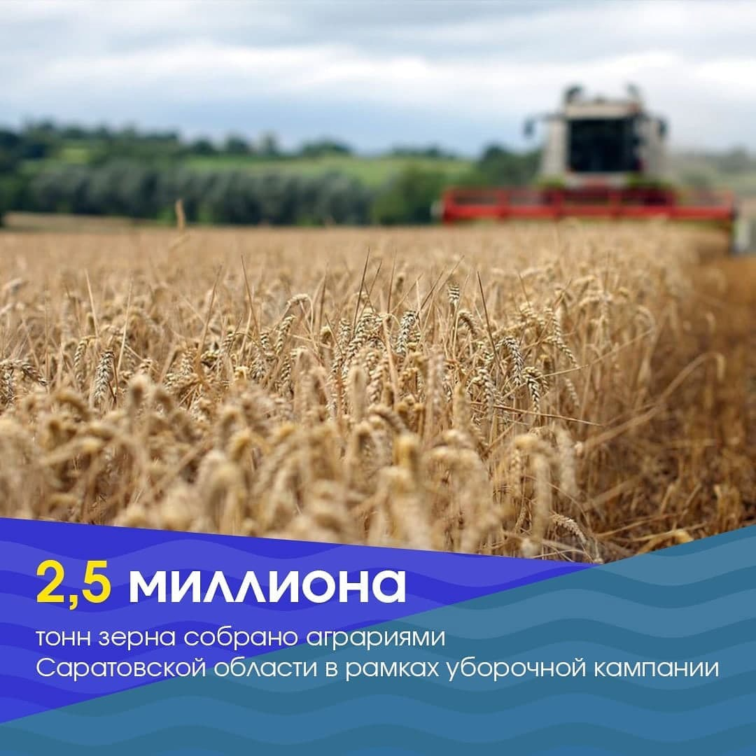 Саратовские аграрии собрали 2,5 миллиона тонн зерна