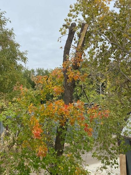 Теплая погода в Оренбуржье продлится еще неделюПод...