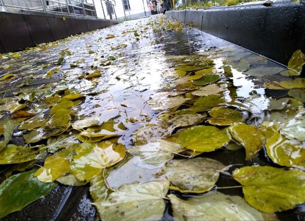 Осень смазала краски дождями...---Кадры Надежды Ка...