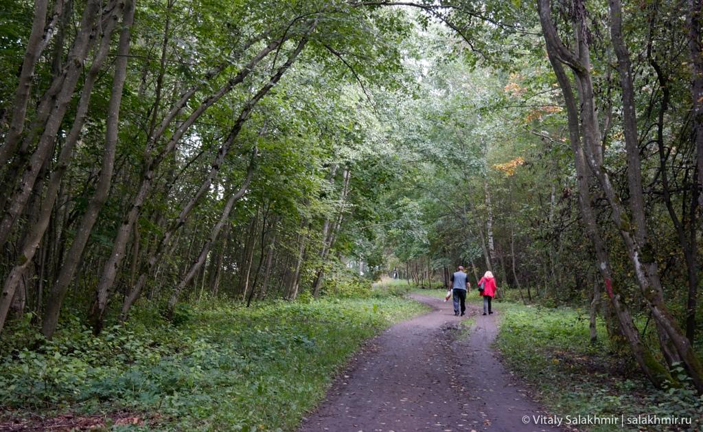Лес в Приоратском парке, Гатчина 2020