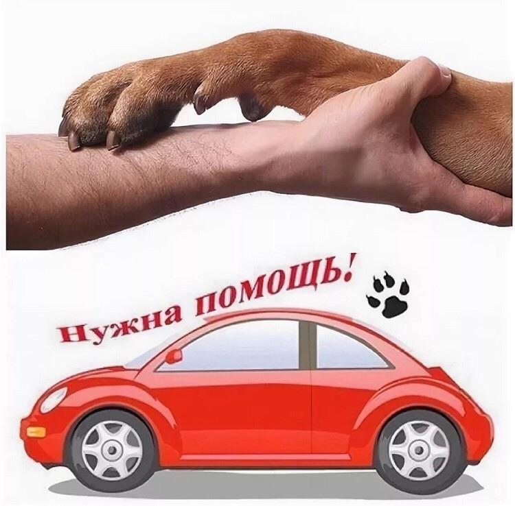 Нижнекамск - Казань  Уважаемые мужчины и девушки
