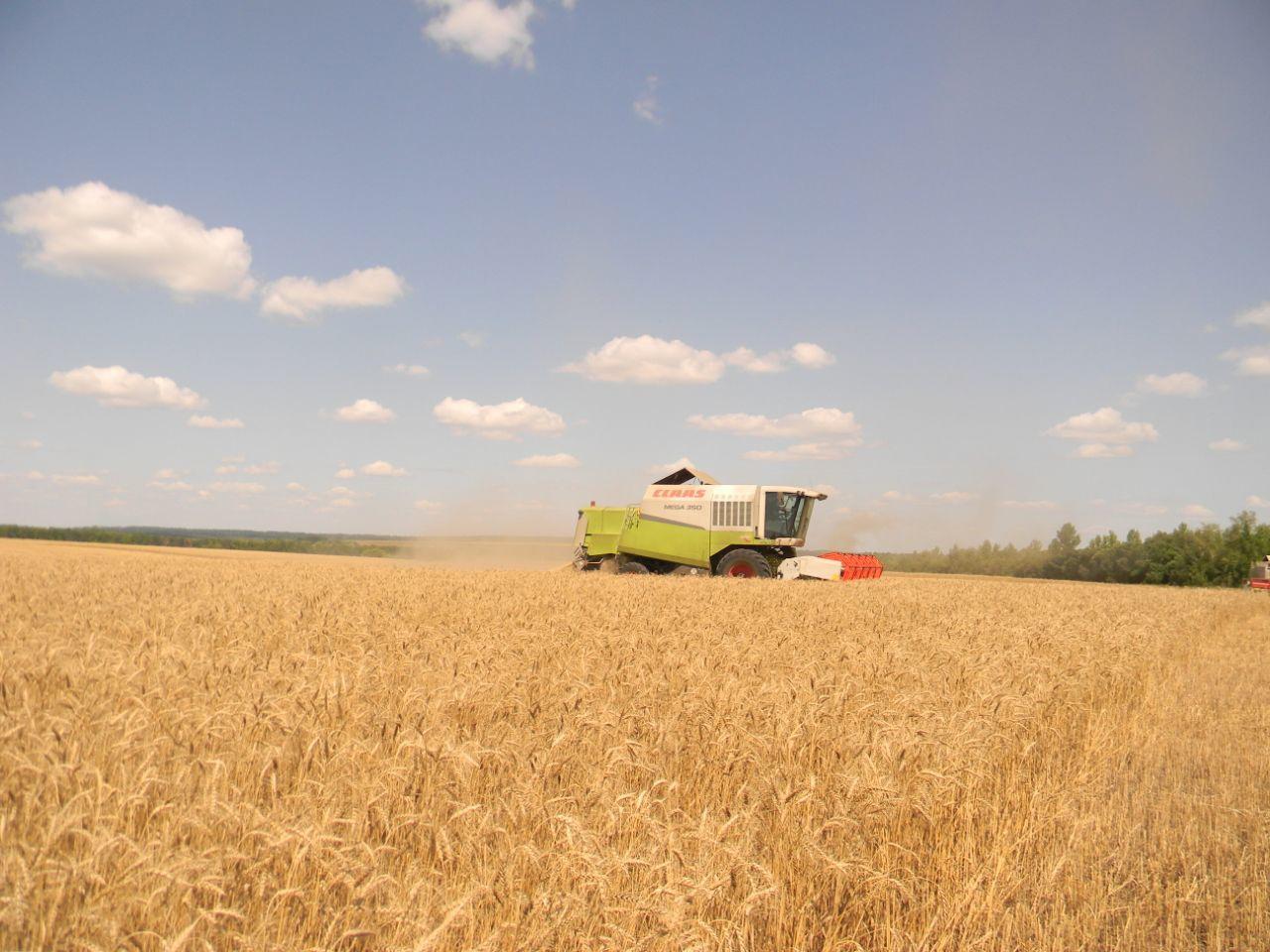 Аграрные хозяйства региона с низкими показателями по урожайности ждёт проверка