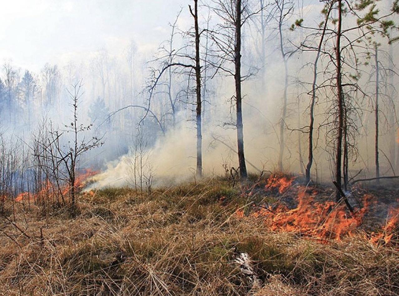 Внимание! Опасность лесного пожара!
