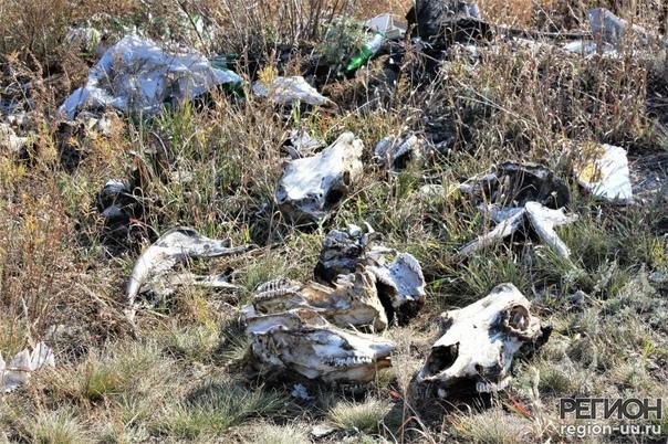 Кости и черепа на окраине селаДесятки черепов и со...