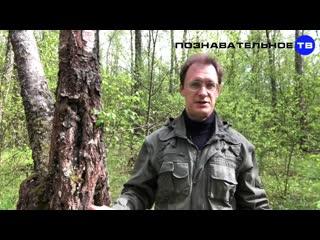 Откуда МИЛЛИАРДЫ рязанского ЧОПа Нефтяная война против США (Познавательное ТВ, А(1)