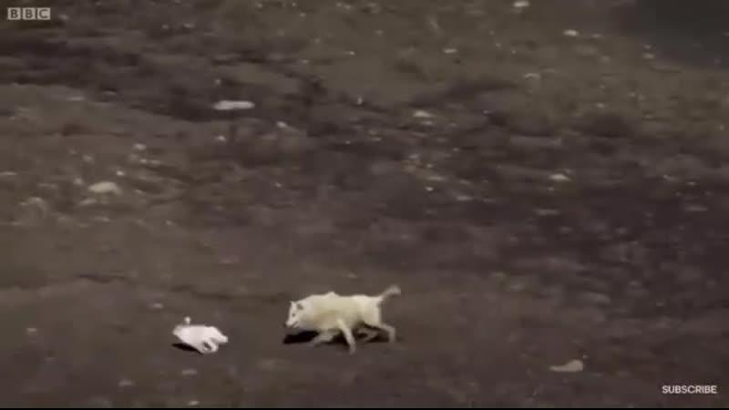 Заяц vs Волки Группа Выжить Любой Ценой