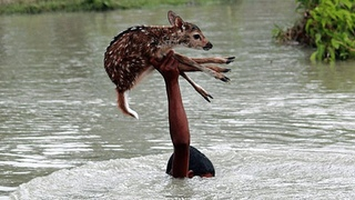 Люди помогают животным. Спасение животных людьми. #17