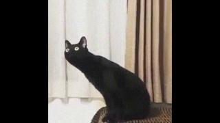 Кот нихуя себе ебанутся.