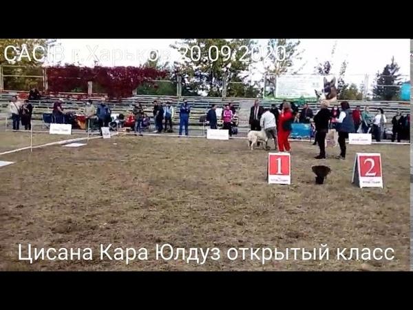 Белая алабайка Цисана Кара Юлдуз на выставке в Харькове 20.09.2020