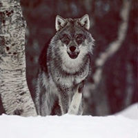 Фотография анкеты Red Devil ВКонтакте