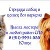 СТРИЖКА СОБАК и  КОШЕК НА ДОМУ 8(911)999-1-555