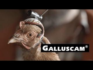 Steady Feathers: LG G2 - Die extremste Kamera aller Zeiten #GoLizzy