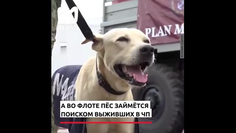 Спасенную собаку взяли на морфлот